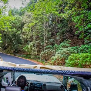 Jeep La Gomera - lasy wawrzynowe