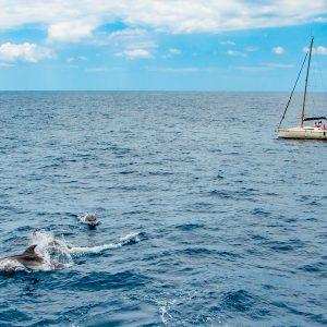 Oglądanie wielorybów podczas rejsu luksusowym jachtem na Teneryfie