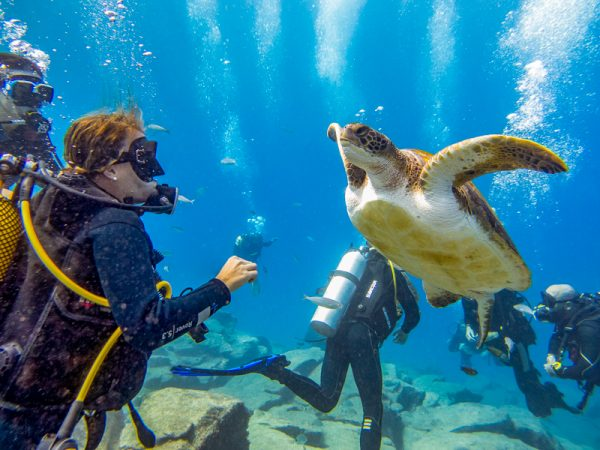 Nurkowanie na Teneryfie z żółwiem