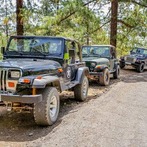 Jeep Wrangler w lesie